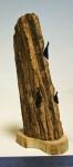 Fossilized bone rookery  $200